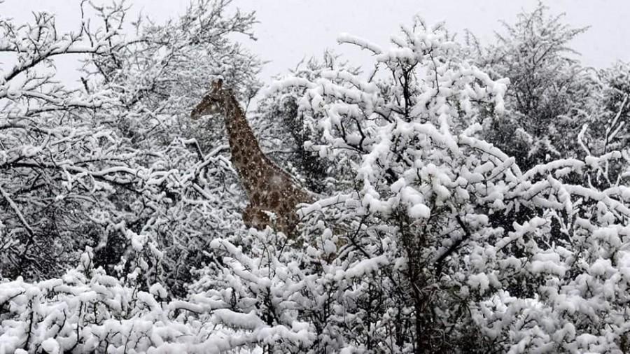 Havazott Dél-Afrikában, zsiráfok és elefántok is kaptak belőle