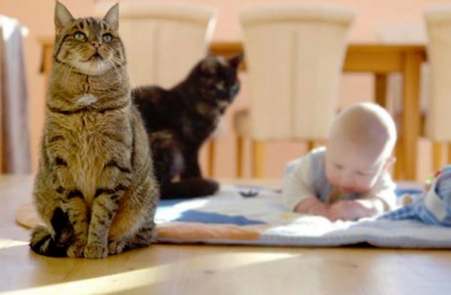 A macska csodás energiája megvédi a gazdit, ezt a legtöbben nem is tudják