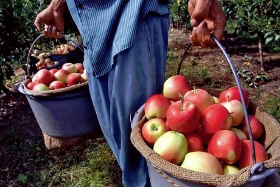 Szedd magad alma 2018 – Az országos lista