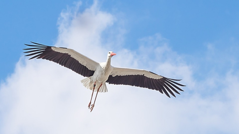 Máris megjöttek afrikai telelésükből az első gólyák Európába