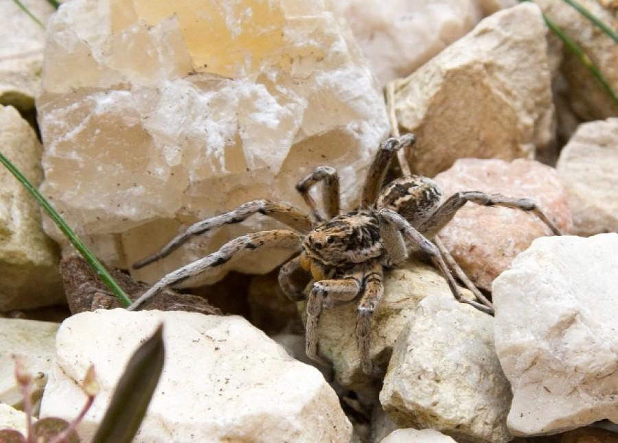 Vigyázat: ekkora pókok szökhetnek be a lakásunkba! Senki se fogja meg őket.