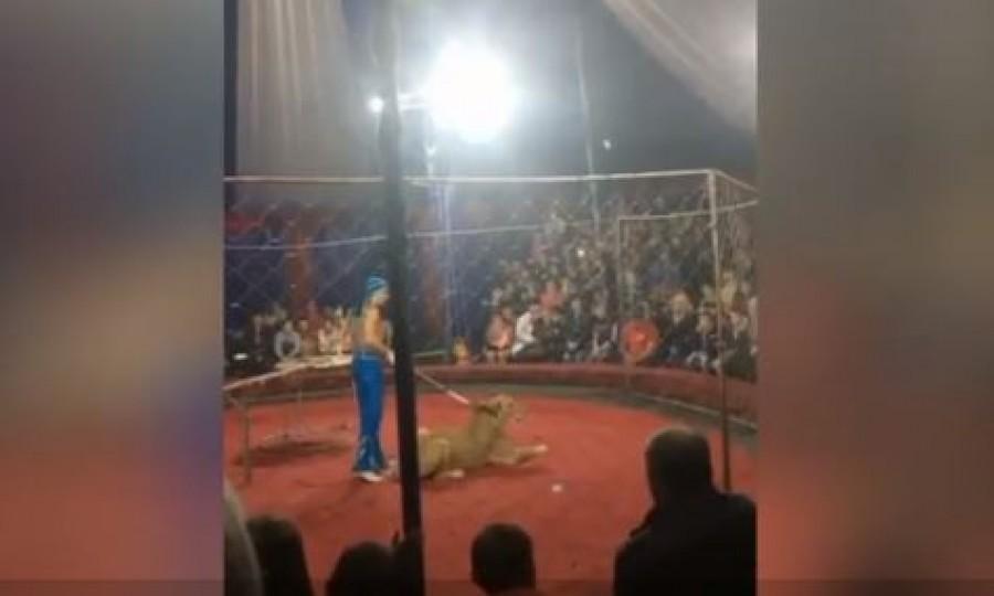 Egy kislányra támadt a cirkuszi oroszlán előadás közben (videó)