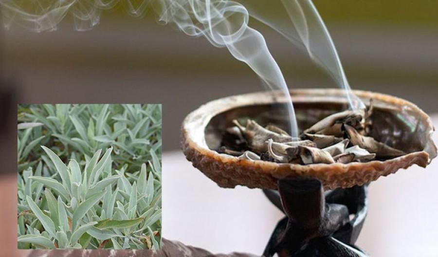 Tisztítsd meg a lakásod a negatív energiáktól ennek a gyógynövénynek a füstjével