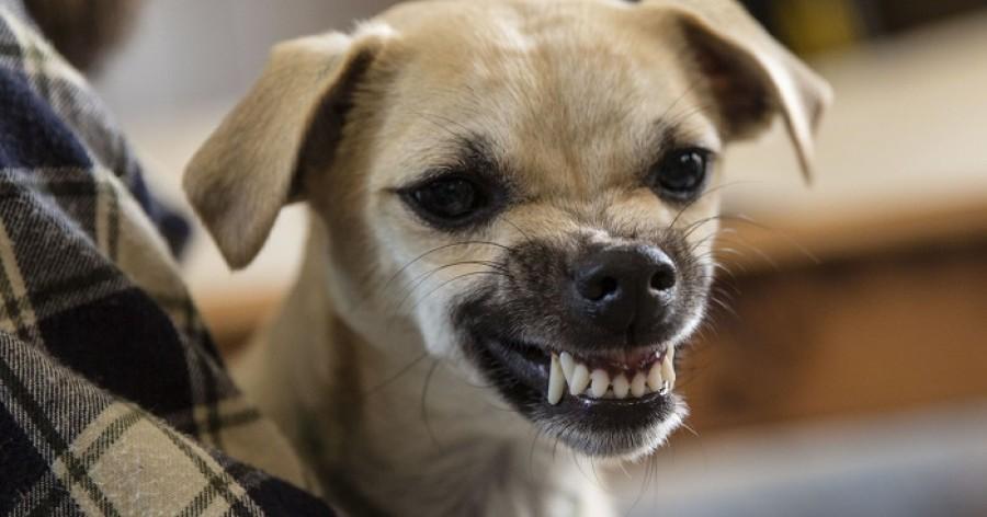 Most már biztos: a kutyák képesek felismerni a rossz embereket