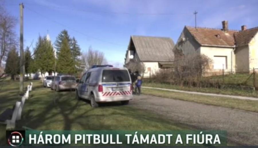 Három pitbull támadt egy 13 éves fiúra egy Somogy megyei faluban