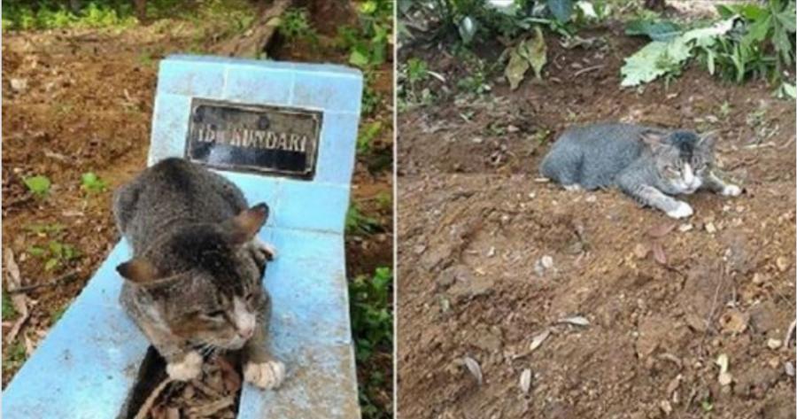 Hiába akarta befogadni a férfi, a cica nem mozdult a sír mellől