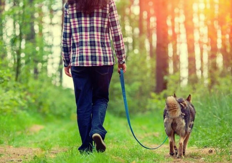 Mától a fél országban tilos a kutyasétáltatás