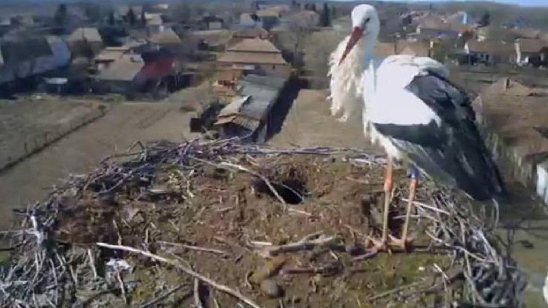 Lenyilazták a híres magyar fehér gólyát, Bárót