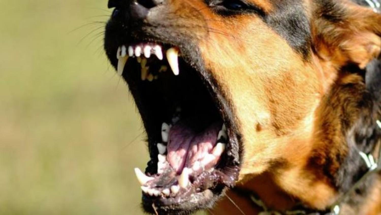 Kutyatámadás: súlyosan megsérült egy 5 éves kislány