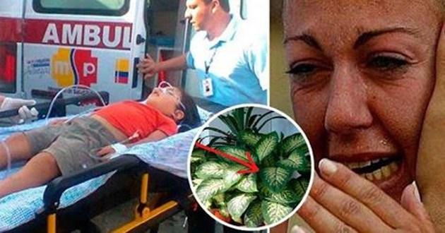 A nő szinte belebetegedett: 5 éves fiát mérgezte meg a szobanövény!