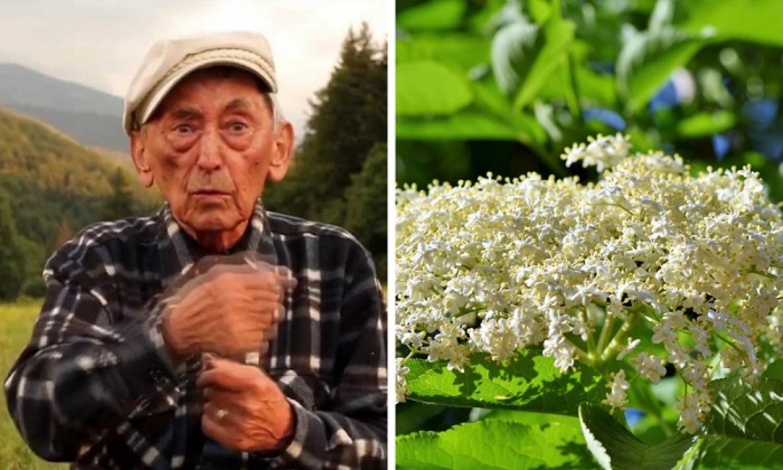 Híres erdélyi fitoterapeuta állítja: A bodzatea sokkal jobb, mint az aszpirin