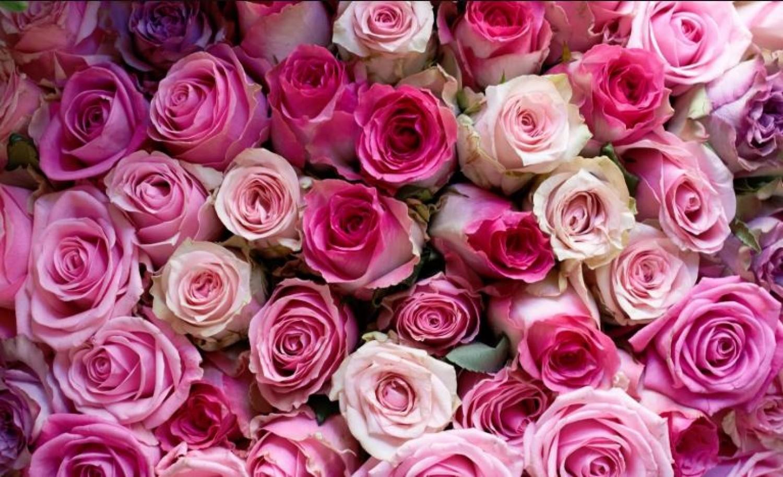 56 féle vegyszert találtak a vágott rózsákban
