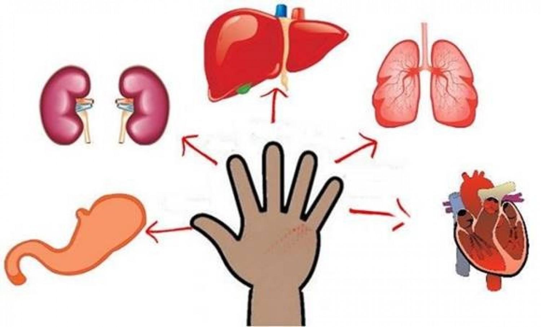 Minden ujjhoz köthető egy szerv – Nyomd 5 percig, hogy elmúljon a fájdalom