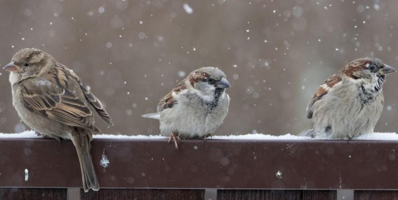 Havazni fog vasárnap - itt várható az első hó.