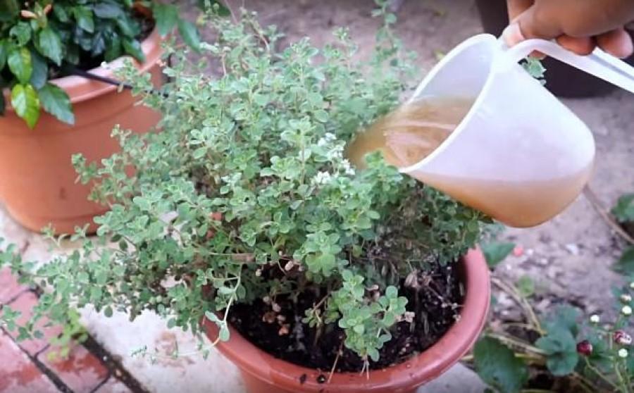 4 +1 természetes táp a cserepes növényeink számára konyhai hulladékból