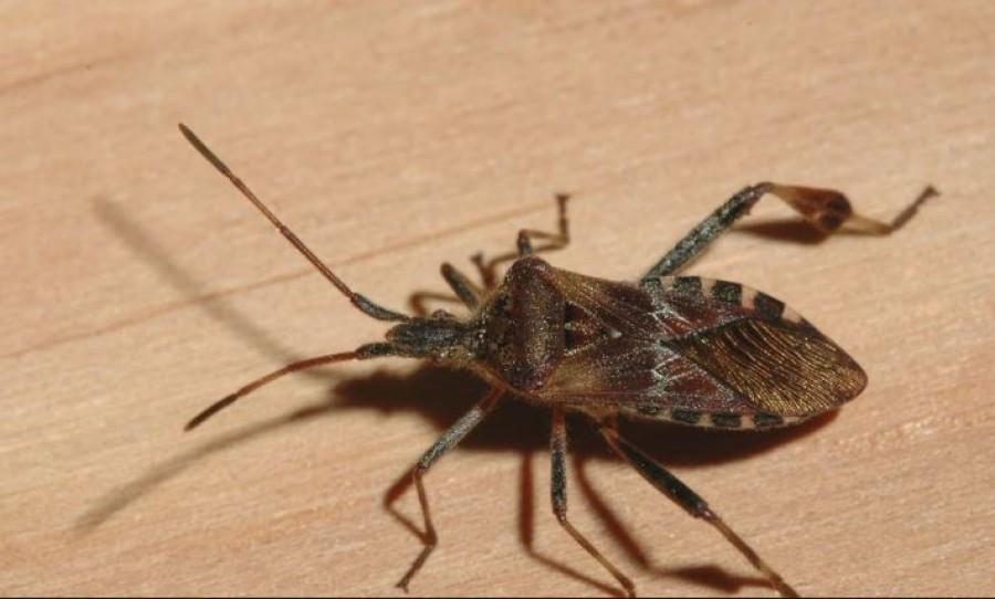 Rendkívül veszélyes rovar! Ha ilyet látsz, azonnal távolodj el tőle!