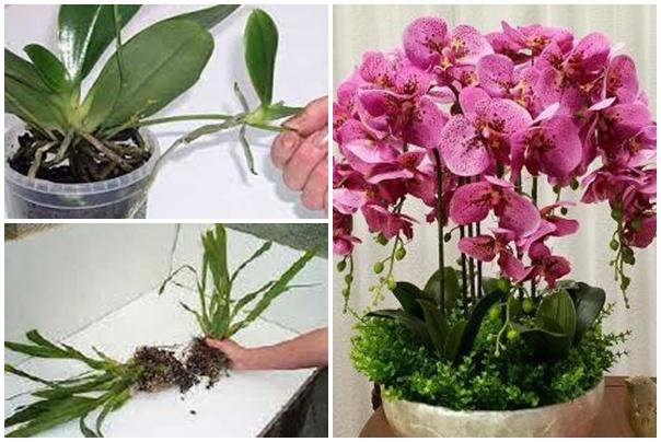 Szaporítsd saját kezűleg az orchideát!
