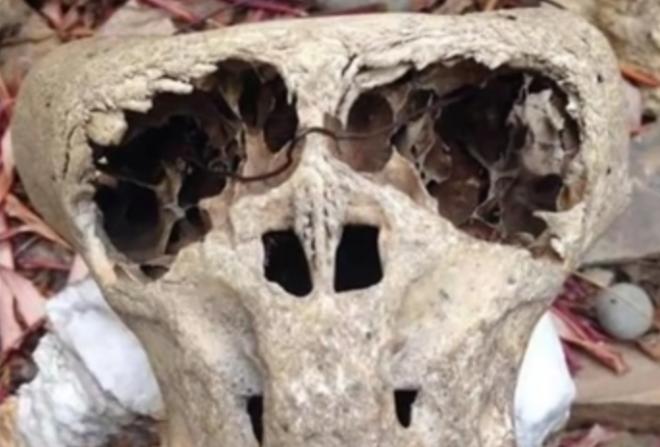 Egyelőre csak találgatják milyen lény koponyájára bukkantak Dél-Oroszországban