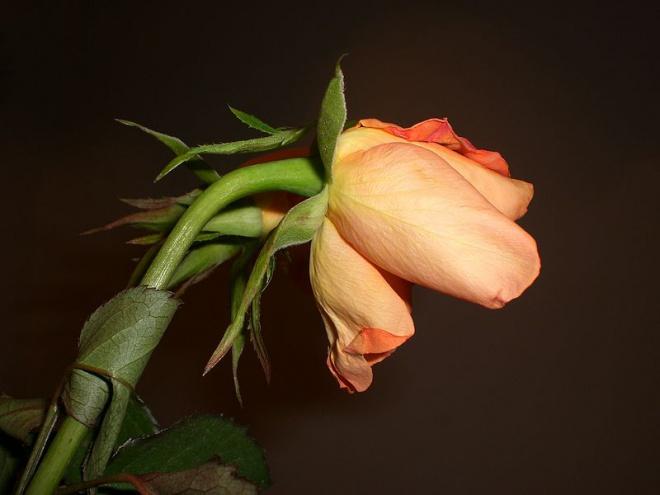Ha szeretsz egy virágot, ne tépd le! Ha letéped elpusztul és eltűnik az, amit szerettél..