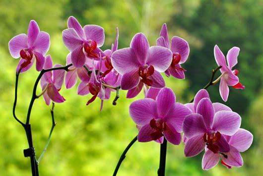 Nem mindegy mivel öntözöd az orchideát! A friss csapvíz nem jó!
