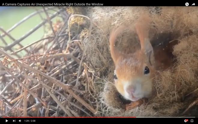 Kukkants be a mókusfészekbe! Ilyen cuki pici mókust még nem láttál!