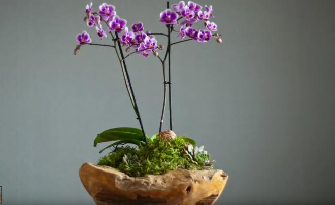 Orchidea virágtál egyszerű eszközökkel (+videó)