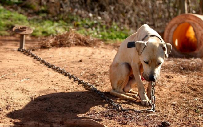 Figyelem! Komoly büntetést kap, aki láncon tartja a kutyáját!