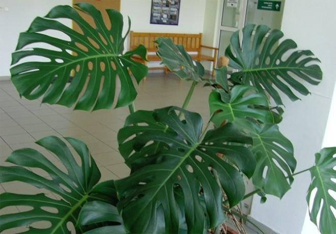Ezek a szobanövények mérgezőek!