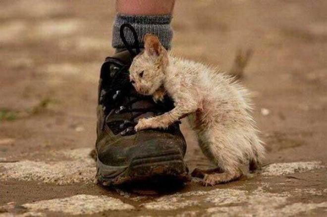 Megható történet egy cicáról, aki megtanított szeretni