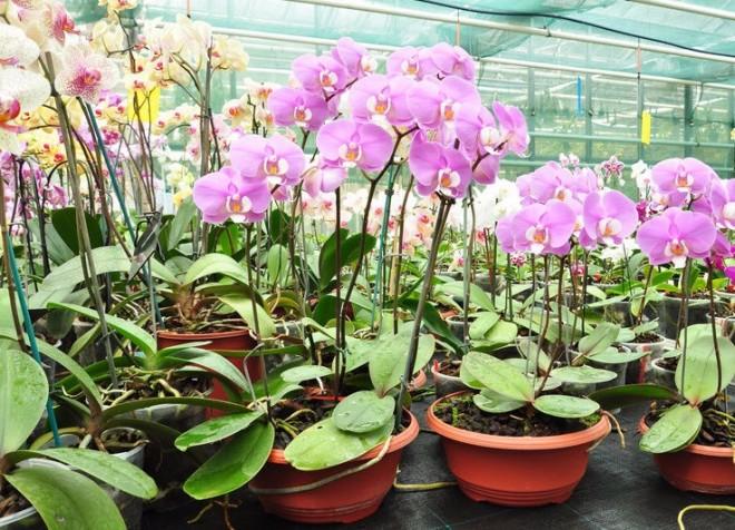 Ősszel és télen is jól érezheti magát az orchideád!
