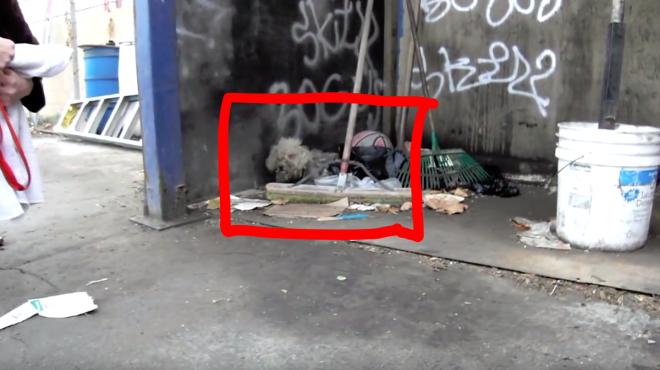 Egy vak kiskutya gubbasztott egy elhagyott telephely egyik sarkában...