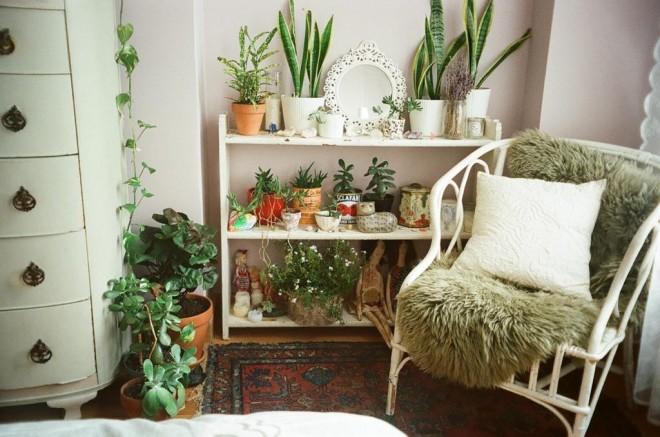 Alvásjavító szobanövények. EZT TEDD a hálószobádban, és tapasztalni fogod a hatását!