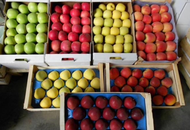 Így tárold az almát, hogy minél tovább egészséges és zamatos legyen!