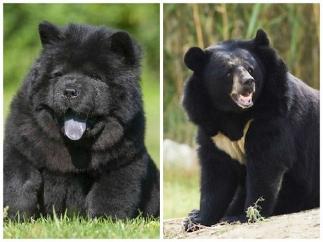 ELKÉPESZTŐ történet! Két év után jött rá, hogy a kutyái valójában medvék!