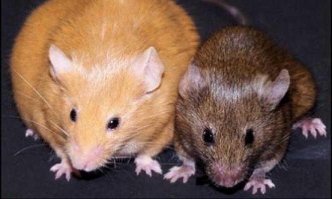 Tartósan így szabadulhatsz meg az egerektől!