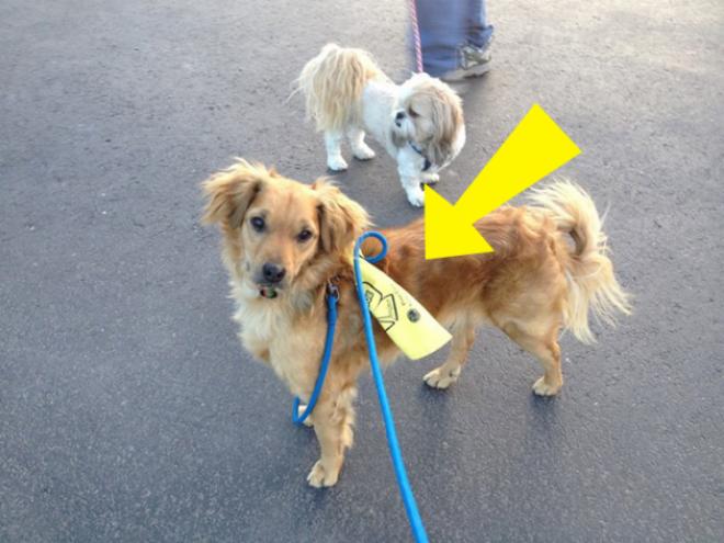Fontos tudni mit jelent a kutyák pórázára kötött sárga szalag