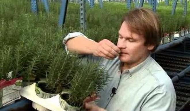 Ennek a fűszernövénynek a szagolgatása 75%-kal javíthatja a memóriádat!