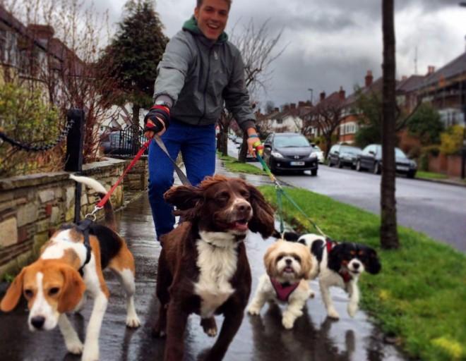 Két hétig kutyát sétáltatott és 800 ezret keresett