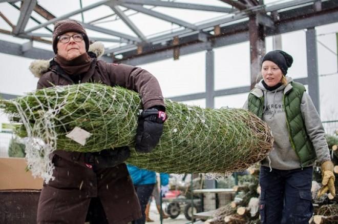 Hasznos tippek a karácsonyfa vásárláshoz. OLVASD EL, MIELŐTT ELINDULSZ, HOGY MEGVEDD!