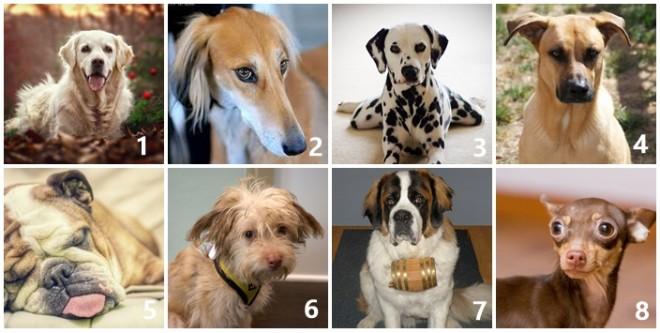 A 8 kutyából melyiket vinnéd haza legszívesebben? Sokat elárul a személyiségedről!
