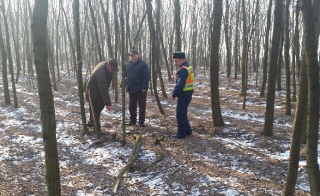 A 46 éves nő nem akart megfagyni, ezért összeszedett némi fát. Tettenérték, már gyanúsított.