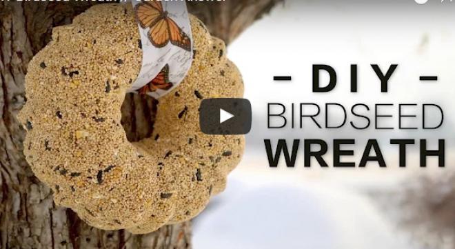 Minden kismadár hálás lesz érte! Így készíts házilag magkoszorút a madarak téli etetéséhez!