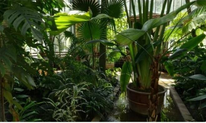 Lépj be a Füvészkert pálmaházába, és nézz körül a különleges 360 fokos videóval!