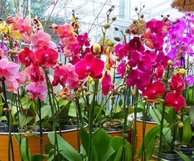 Az orchidea kedvelők Mekkája! Ezt a helyet látni kell!