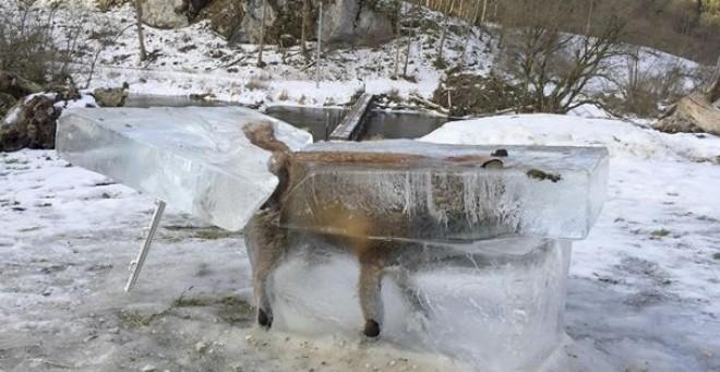 EZ NEM JÉGKORSZAK RAJZFILM! Jégtömbben vágták ki a Dunában megfagyott rókát! VIDEÓ