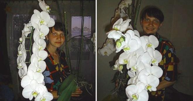 Átültette az orchideát, és káprázatos fejlődésnek indult!
