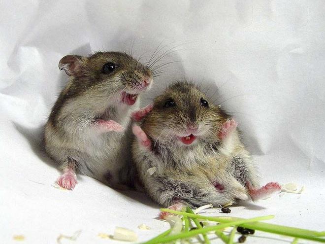 Hihetetlen, de az egerek is énekelnek!