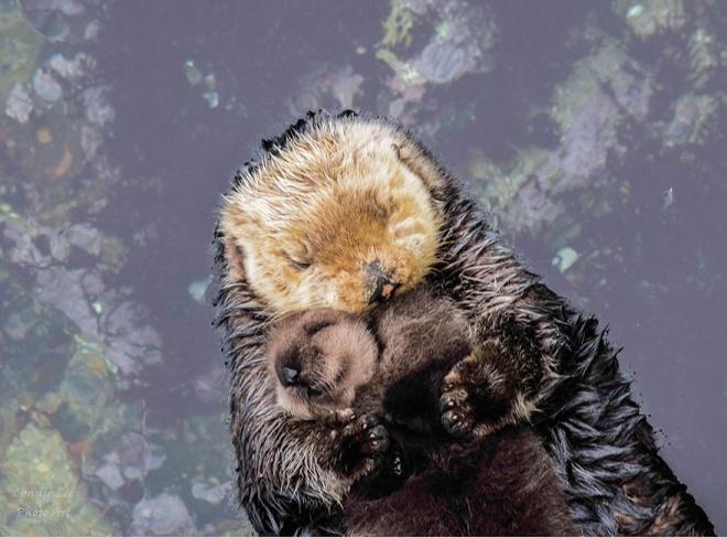 Bébibunda és anyai szeretet