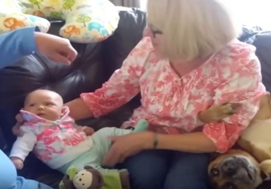 A kutya féltékeny volt  a kisbabára. Nem fogsz hinni  a szemednek, mit csinált! (videó)