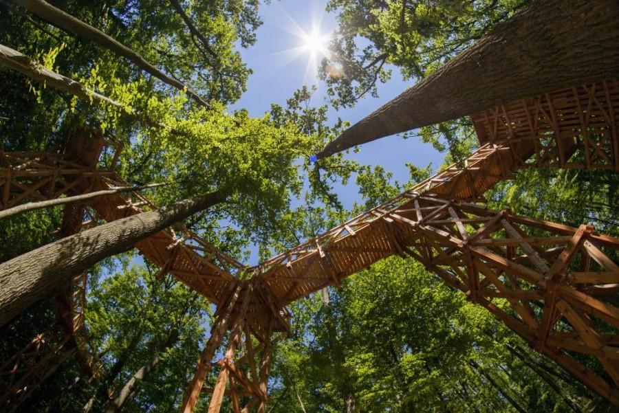 10 méteres magasságban, a fák lombjai között sétálhatsz Ezt egyszer mindenkinek ki kellene próbálni